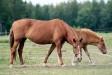 I.P. Suvitar