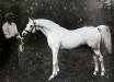 Skowronek PL