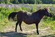 SMK Sinivuokko