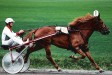I.P. Sukkula
