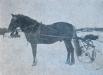 Simonpoika