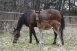 From Heaven Above orivarsa